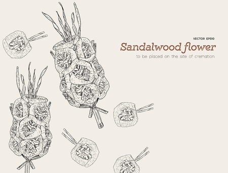 Sandalwood flowers for funeral, hand draw sketch vector. 向量圖像