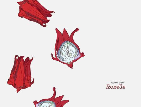 hand getekende illustratie Roselle bloem.