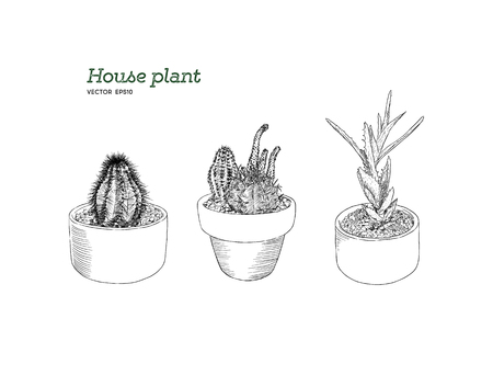 set of house plant in pot, hand draw sketch vector. Vettoriali
