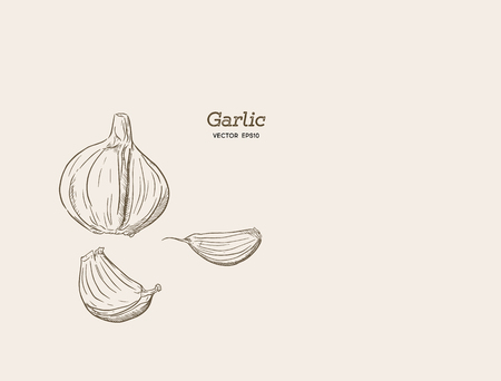 Garlic hand drawn vector illustration set.