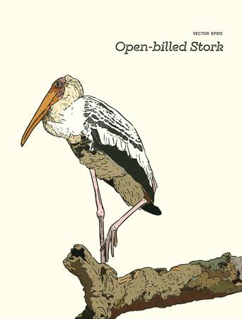 Asian openbill birds on tree branch.