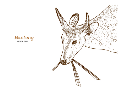 banteng, red bull hand draw sketch vector. animal concept vector.