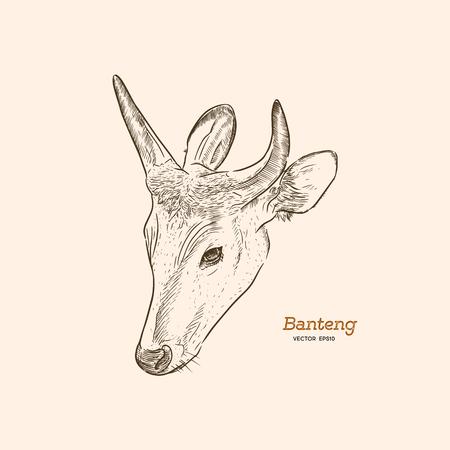 banteng, red bull hand draw sketch vector. animal concept vector.