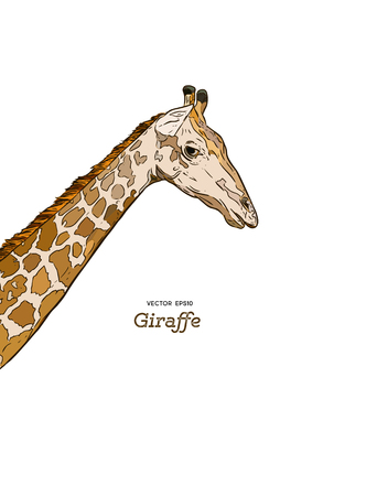 The head of a giraffe sketch vector graphics drawing