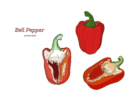 Pepper hand drawn vector set. Vegetable engraved style object, full, half and slices. Isolated bell pepper. Detailed vegetarian food drawing. Farm market product. Paprika icon
