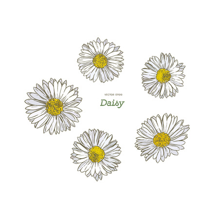 Common daisy hand draw sketch vector illustration. Vettoriali