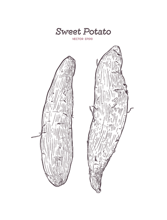set of sweet potatoes or purple potatoes, hand drawn sketch vector.