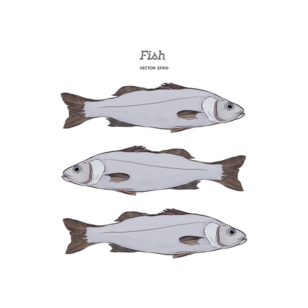 Hand Drawn Illustrations of fish. Illustration