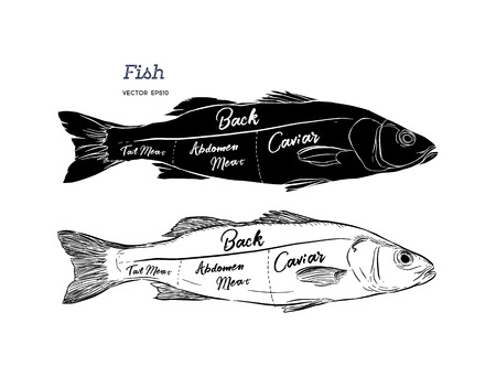 Poster fish cutting scheme lettering head, back meat, abdomen, tail in vintage style drawing