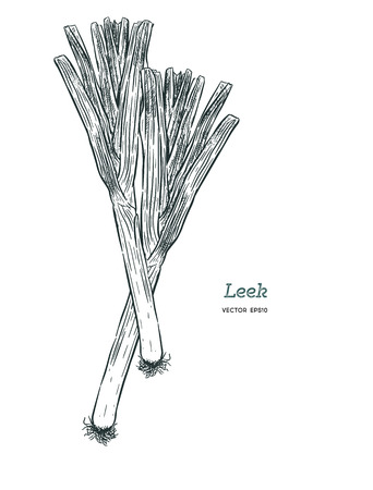 Hand drawn sketch style fresh leeks set isolated on white background. Single and composition with slices. Vintage illustration of healthy organic food.