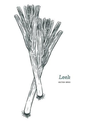 Ensemble de poireaux frais de style croquis dessinés à la main isolé sur fond blanc. Unique et composition avec tranches. Illustration vintage d'aliments biologiques sains. Vecteurs
