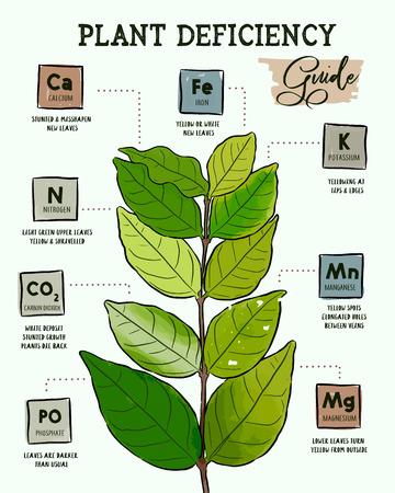 Identifizierung von Pflanzennährstoffmangel, Handzeichnungsvektor.
