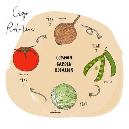 La rotation des cultures consiste à cultiver une série de types de cultures différents ou différents dans la même zone au cours de saisons séquencées. Main dessiner la série de rotation des cultures vectorielles croquis. Vecteurs
