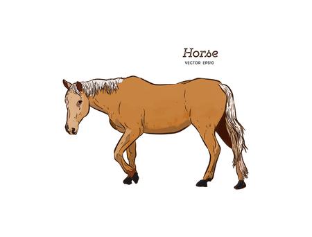Cavallo, vettore di schizzo di tiraggio della mano.