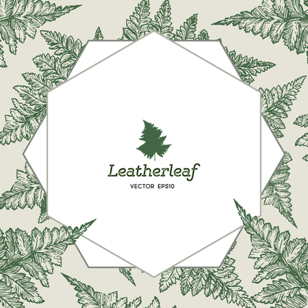 Frame of . Leatherleaf fern. Botanical vector sketch illustration.