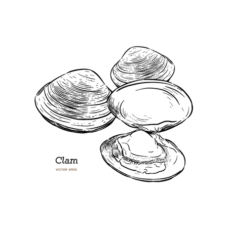 Clams, mussels, seafood, sketch style vector illustration isolated on white background. Drawing of clams as a common seafood delicacy. Edible underwater mussels, healthy organic shellfish food Banque d'images - 111018631