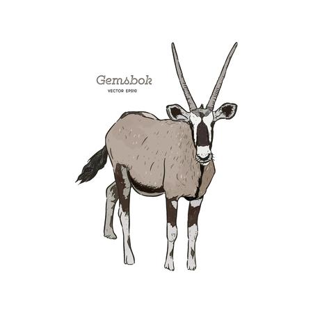 Portrait d'un Gemsbok debout avec deux cornes regardant dans la came, vue latérale, illustration vectorielle dessinée à la main