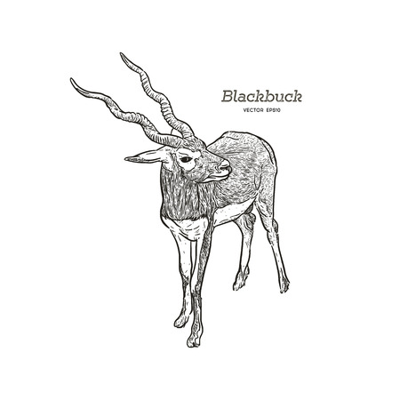 Blackbuck antelope Strepsiceros cervicapra, illustration vector. Иллюстрация