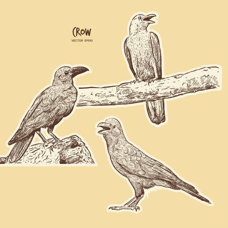 set of crow, hand draw sketch vector.