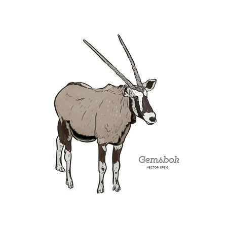 Portrait d'un Gemsbok debout avec deux cornes, vecteur de tirage à la main.
