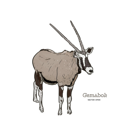 Portrait of a standing Gemsbok with two horns, hand draw vector. 向量圖像