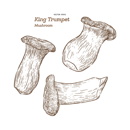 Mushroom Type King Trumpet Vector Illustration - Vector