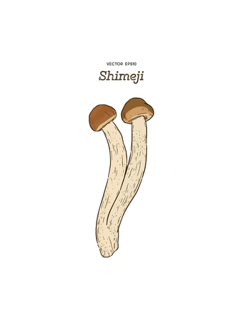 Hand drawing a gourmet mushroom Shimeji. Style Vintage engraving. Vector illustration art. Isolated objects of nature. Cooking food design. - Vector