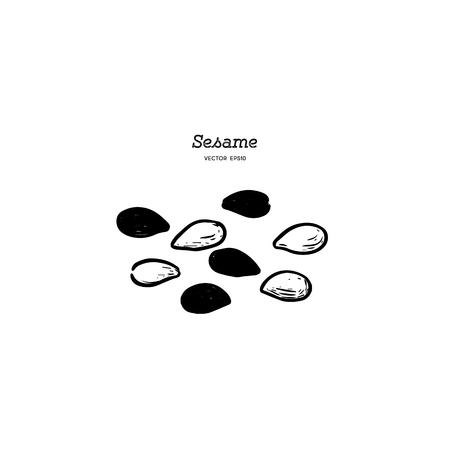 sesame, hand draw sketch vector.