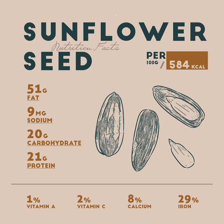 Nutrition facts of sunflower seed, hand draw sketch vector.