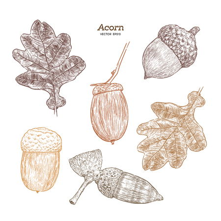 Set of acorn, hand draw sketch vector. Ilustrace