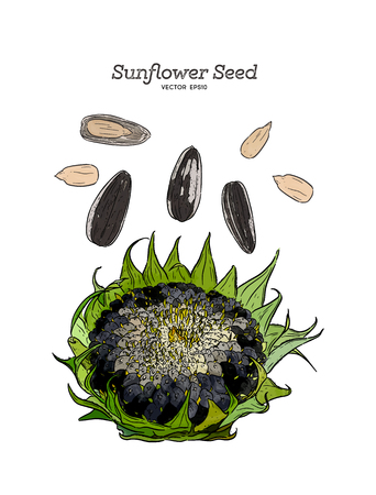 Sunflower seed, hand draw sketch vector.