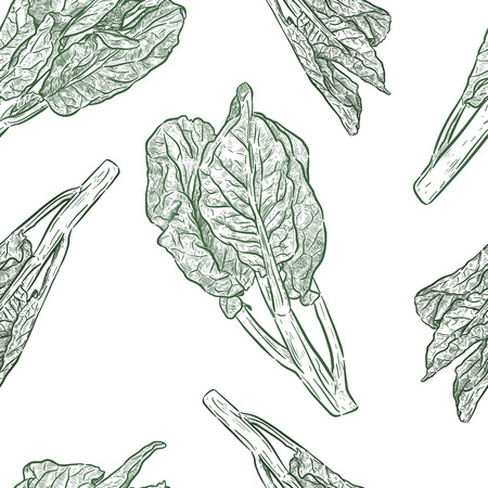 Chenese Kale or Chinese broccoli seamless pattern, vegetable. hand draw sketch vector. Ilustrace