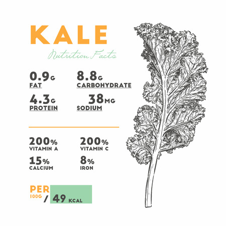 Nutrition facts of Kale, Hand draw sketch vector. Vegetable.