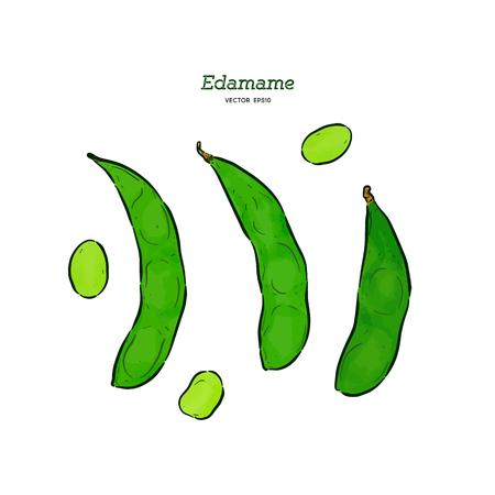 edamame, Hand draw sketch vector. Illustration
