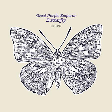 Great purple emperor (Sasakia charonda), hand draw sketch vector. Illustration