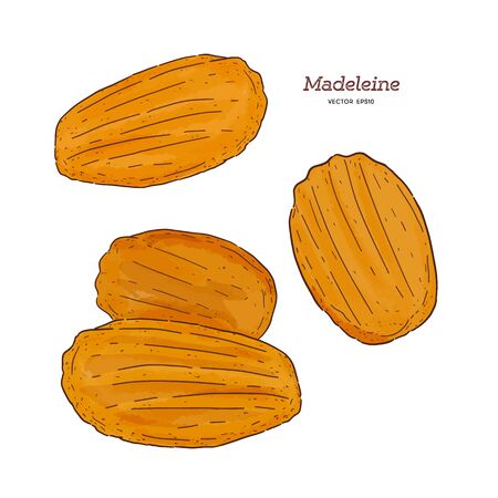 Madeleine de Commercy  Famous French pastry, hand draw sketch vector.