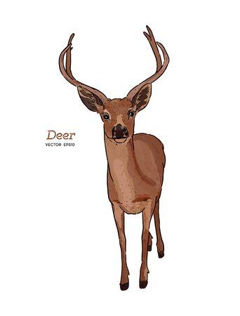 vector vintage styled engraved hand drawn deer animal.
