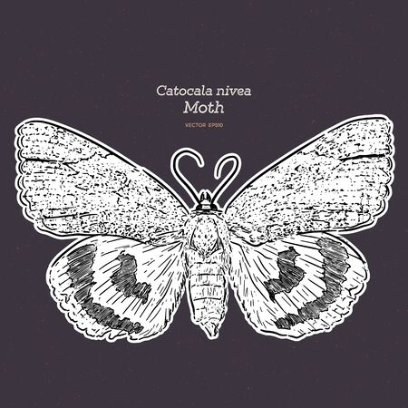 Catocala Moth is a generally Holarctic genus of moths in the Erebidae family, vintage line drawing or engraving illustration. - Vector