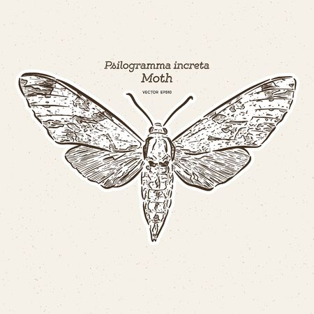 Psilogramma increta, the plain grey hawkmoth, is a moth of the family Sphingidae. hand draw sketch vector.