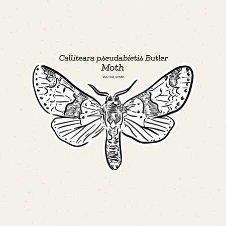 Calliteara pseudabietis Butler is a moth of the family Erebidae. hand draw sketch vector.  イラスト・ベクター素材
