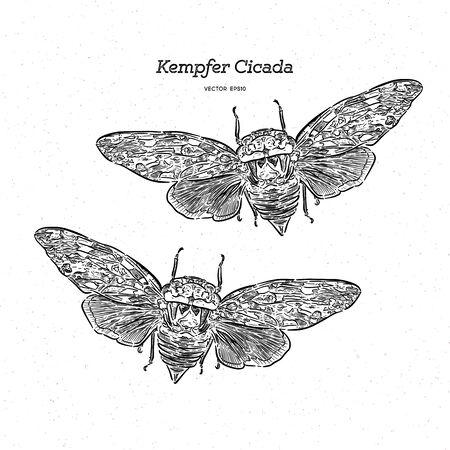 Platypleura kaempferi cicada, hand draw sketch vector.