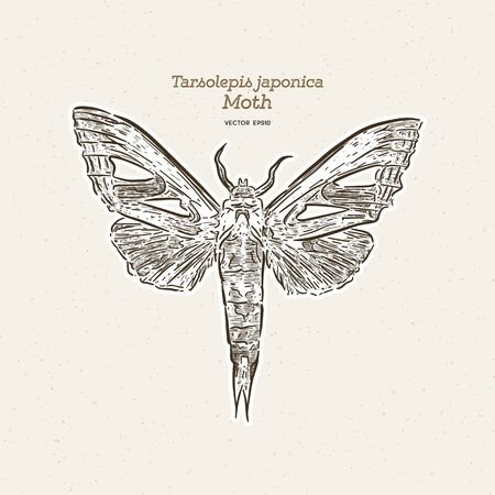 Tarsolepis japonica is a species of moth of the Notodontidae family. It is found in Taiwan and Japan. hand draw sketch vector. Illustration