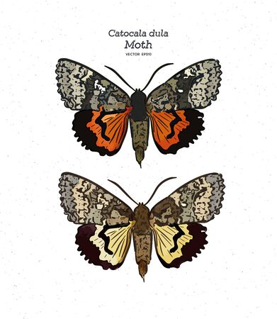 Catocala dula is a moth of the family Erebidae. It is found in Russia, Japan, Korea and China. hand draw sketch vector.