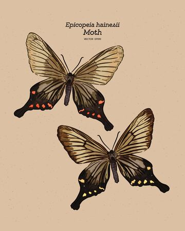 Epicopeia hainesii is a moth of the family Epicopeiidae. hand draw sketch vector.