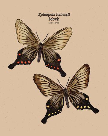 Epicopeia hainesii is a moth of the family Epicopeiidae. hand draw sketch vector.