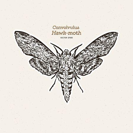 Agrius convolvuli, the convolvulus hawk-moth is a large hawk-moth. hand draw sketch vector.  イラスト・ベクター素材