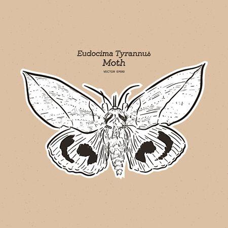 Eudocima tyrannus is a moth of the family Erebidae. hand draw sketch vector.