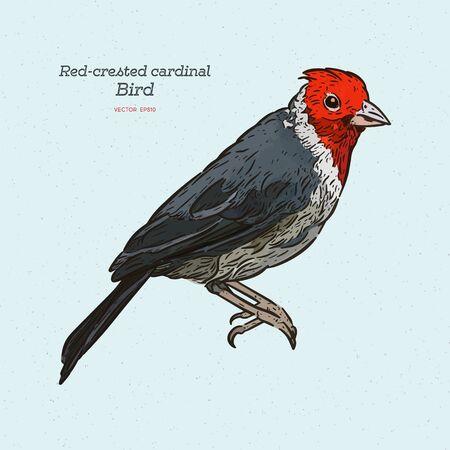 Red-crested cardinal, Paroaria coronata, single bird. hand draw sketchvector. Иллюстрация