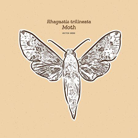 ラガスティストリリネアータはスフィンギ科の蛾です。それは日本から知られています。手描きスケッチベクトル。