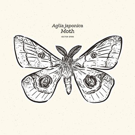 Aglia japonica Moth, hand draw sketch vector. Illusztráció